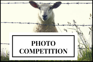 Lambe's Top Oil Photo Competition