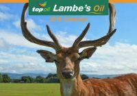 Lambes Oil Calendar 2018